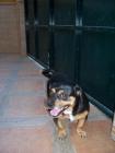 perrito necesita buen hogar - mejor precio | unprecio.es