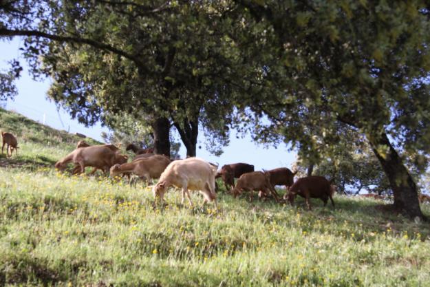 Finca  gran dehesa  2.000 has. provincia  de badajoz (españa)