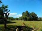Finca/Casa Rural en venta en Llubí, Mallorca (Balearic Islands) - mejor precio | unprecio.es