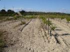 Finca/Casa Rural en venta en Gandesa, Tarragona (Costa Dorada) - mejor precio | unprecio.es