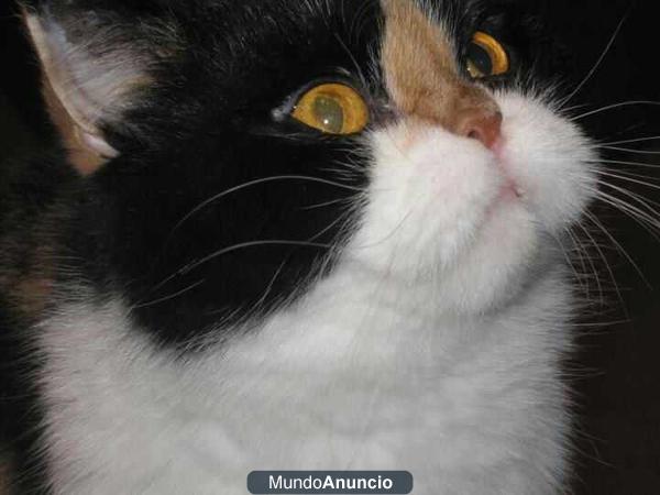 Gato Persa Busca Hogar Mejor Precio