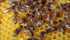 Retirada-eliminaciónn enjambres de abejas y avispas - mejor precio | unprecio.es