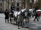 Alquiler coche caballos feria Sevilla 2013 - mejor precio | unprecio.es
