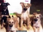 Cachorros de Pastor Belga buscan casa - mejor precio | unprecio.es