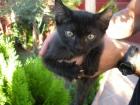 regalo 2 gatitos negros zona sur de madrid - mejor precio   unprecio.es