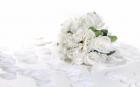 Reportajes de boda en vídeo Full HD ECONOMICO - mejor precio | unprecio.es