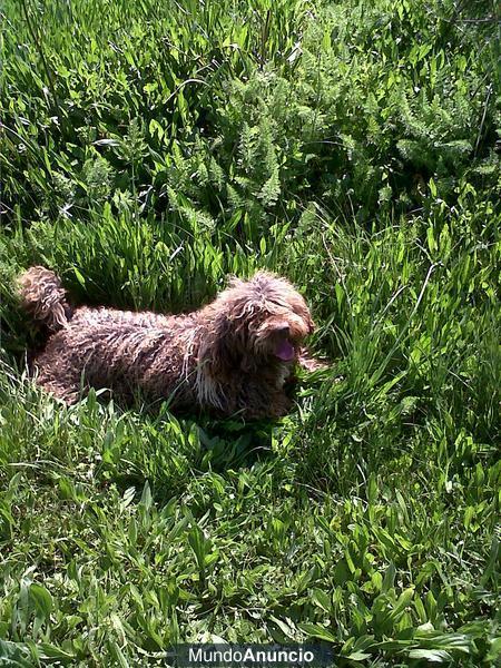 Busco perra de aguas para monta mejor precio for Busco piso de compra