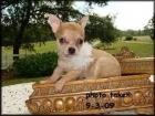 hombre - Chihuahua - mejor precio   unprecio.es