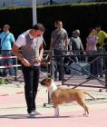 Adiestramiento canino y cuidado de perros Torrevieja - mejor precio | unprecio.es