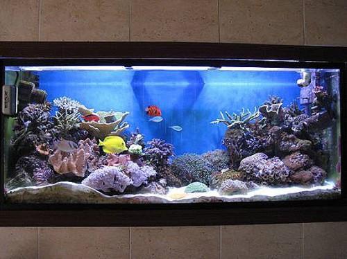 Instalacion y montaje de acuarios a domicilio mejor - Montaje de acuarios ...
