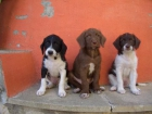 Regelamos tres guapos perritos - mejor precio | unprecio.es