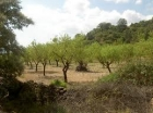 finca en Segorbe Castellon de unos 70.000 m3 con el agua de riego opcional - mejor precio | unprecio.es
