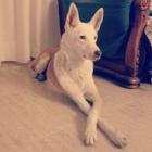 Cuidadora canina Madrid - mejor precio | unprecio.es