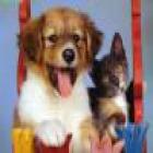 Seguros de accidente o enfermedad y responsabilidad civil para perros o gatos - mejor precio   unprecio.es