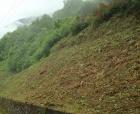 Limpieza de terrenos y parcelas,tala de pinos,tala y poda de pino,tala en altura - mejor precio   unprecio.es