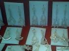 Importante empresa del sector joyeria artesanal requiere distribuidora - mejor precio | unprecio.es