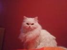 busco gato pesa - mejor precio   unprecio.es