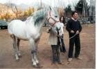 vendo caballo p.r.e. - mejor precio | unprecio.es
