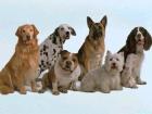 Paseadora de perros - mejor precio | unprecio.es