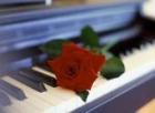 cantante pianista - mejor precio | unprecio.es