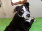 Axl – Cachorro, necesita una familia - mejor precio | unprecio.es
