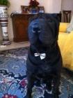 perro shar pei negro para monta - mejor precio | unprecio.es