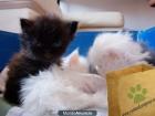 Venta de gatos persas - mejor precio | unprecio.es