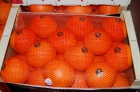 naranjas citricos y fruta de hueso - mejor precio   unprecio.es