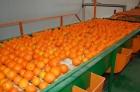 Naranjas navelinas y salustianas - mejor precio   unprecio.es
