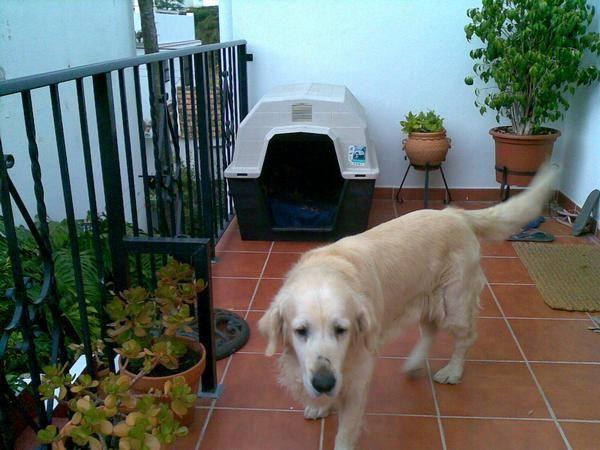 Vendo caseta perro 664046 mejor precio for Vendo caseta jardin