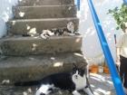 Gato Perdido responde al nombre de Kiko es el negro y blanco - mejor precio | unprecio.es