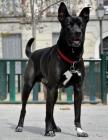 Nuestro perro precioso - mejor precio | unprecio.es