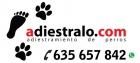 Adiestramiento de perros Madrid - mejor precio | unprecio.es
