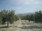 Fincas de olivar - mejor precio | unprecio.es