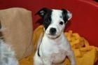 Snoopy, peque de 2 meses en adopción! - mejor precio   unprecio.es
