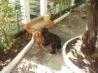 venta de cachorro de cocker color ruano nacido 15/10/2006. - mejor precio | unprecio.es