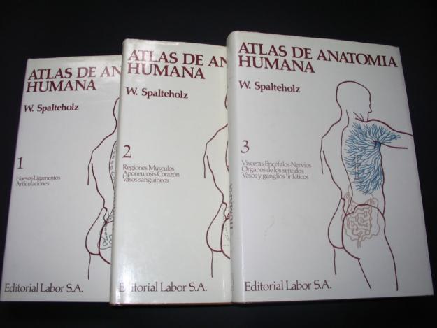 Vendo Atlas de anatomia humana W.SPALTEHOLZ 594674 - mejor precio ...