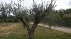 Se venden olivos centenarios - mejor precio | unprecio.es
