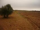 Finca rústica en Tarazona de la Mancha - mejor precio   unprecio.es