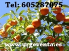 Finca de naranjos en venta - mejor precio   unprecio.es