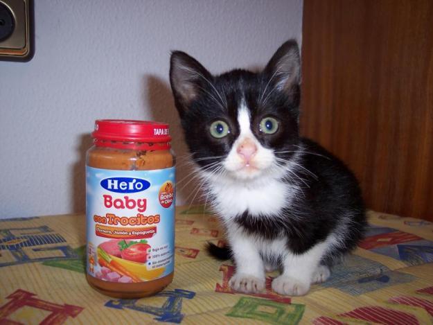 Acogida adopci n urgente silvestre gatito beb de un - Gatitos de un mes ...